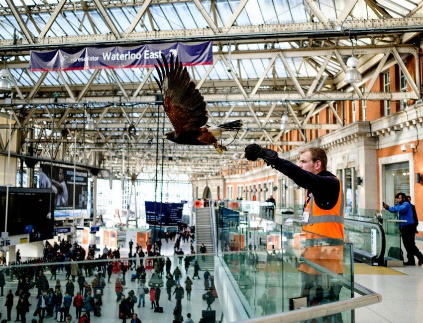 24-hours-on-the-london-underground-night-tube-street-photography-tarikahmet-hawk-underground