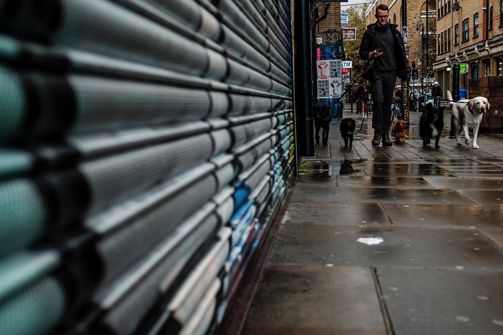 Man walking 4 dogs in London